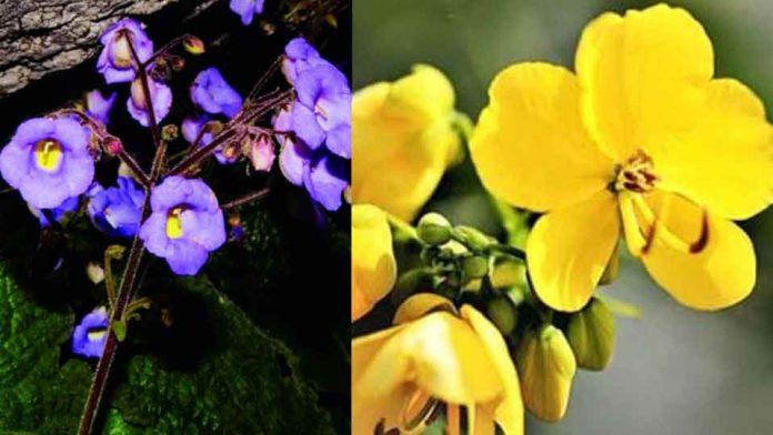 Wayanadu-forest-Flower