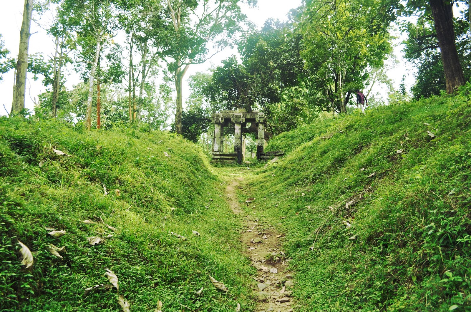 Wayanadu forest area