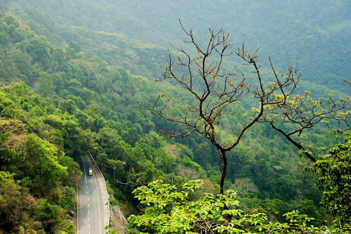 Wayanadu forest