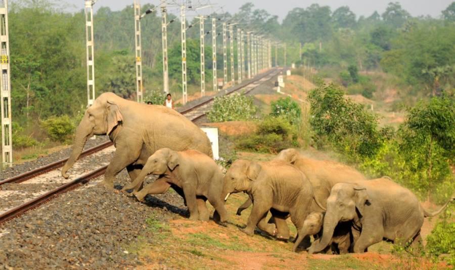 elephants-crossing-tracks