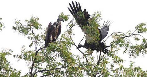 vulture.jpg.image