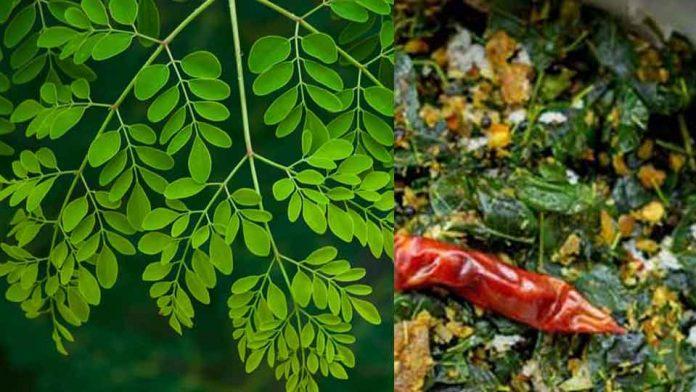 Muringa-Leaves.image.new
